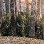 partenza foresta che cammina