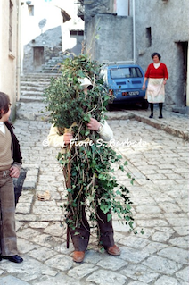 Fiore Silvestro Barbato